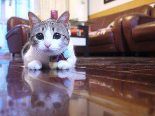 猫を見守る赤線 カメラ